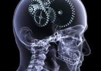 мозги_4